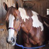 natchez bend trish franks equestrian riding school-0067