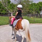 currey ingram trish franks equestrian riding school (2 of 2)